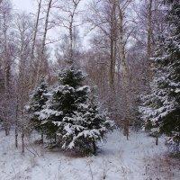 Зимний лес :: Юрий Кузнецов