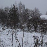Зима :: Aнна Зарубина