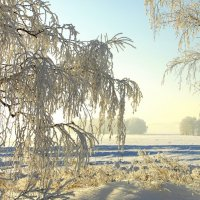 Мороз и солнце-так чудесно! :: nadyasilyuk Вознюк