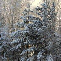 Спит под снегом зимний лес. :: nadyasilyuk Вознюк