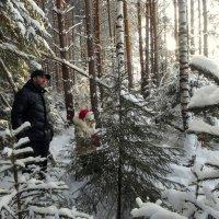 Выбираем елочку на Новый год. :: Елизавета Успенская