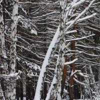 Околдован лес стоит... :: Галина Стрельченя