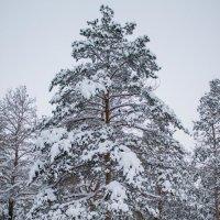 Зимний парк :: Александр Семенов