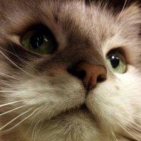 Мой котейка :) :: Наталия Маресьева