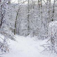 Вниз по лесой тропе.. :: Юрий Стародубцев