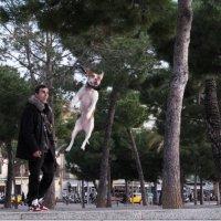 Прыжок :: Татьяна Выхристюк