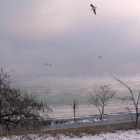 Туман над морем. :: Raisa Ivanova