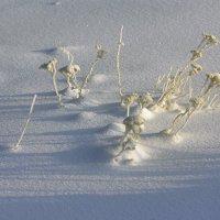 Зимние цветы :: Валентина Харламова
