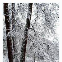 первый снег2 :: Вера Ульянова