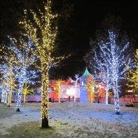 Новогодние деревья на Тверской :: Дмитрий Никитин