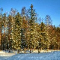 В зимнем парке :: Милешкин Владимир Алексеевич