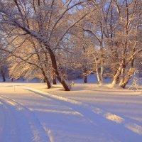 Короткий зимний день... :: Елена Ярова