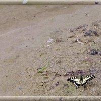 Речной песок..... :: Святец Вячеслав