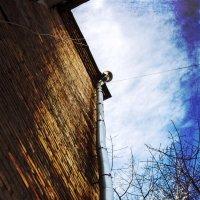 Вверх по водосточной трубе :: Veyla Vulpes