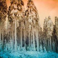 Зимушка зима :: Надежда