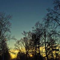 Утро в парке или днем с огнем. :: cfysx