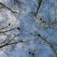 В небесной вышине... :: Алёна Савина