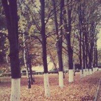 осень :: Лизочка Довгаш