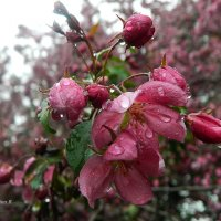в каплях дождя :: Galina R