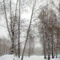 Начались серые будни ...15 01 2016. :: Мила Бовкун