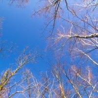 Небо :: Евгений Лебедь