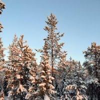 Зима в лесу :: Ольга