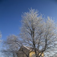 Зимнее дерево :: Aнна Зарубина