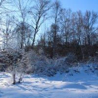 Зимнее утро :: Лариса