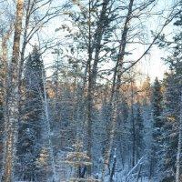 рождественская прогулка :: татьяна малышева