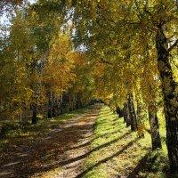 Осенняя аллея :: Alexander N