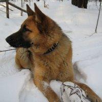 А нам зима только в радость, особенно если мячик есть... :: Людмила Огнева