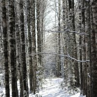 в лесу :: Владимир Сергеевич