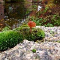 И на камнях растут грибы... :: Эдвард Фогель