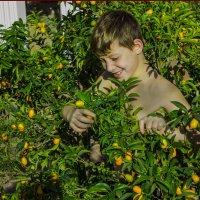 сбор урожая :: Адик Гольдфарб