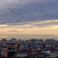 Птицы над городом :: Андрей Майоров