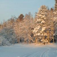 Морозный зимний день :: Яна Старковская