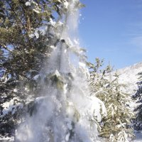 снежок :: Сергей Глушко