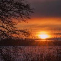 утренний пожар :: liudmila drake