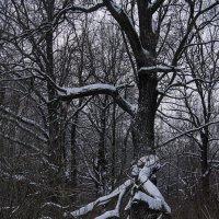 Старый дуб :: Яков Реймер