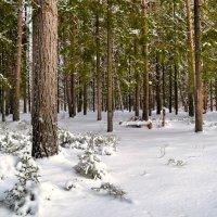 На заснеженной лесной поляне :: Милешкин Владимир Алексеевич
