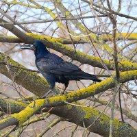Одинокая птица :: Paparazzi