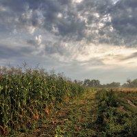 Про кукурузу :: Сергей Михайлович