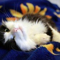 жизнь кошачья :: Tiana Ros