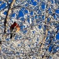 мороз :: Валерия Яскович