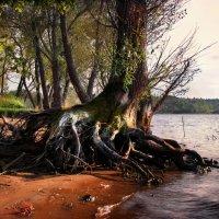 Roots :: Алексей Евсеев