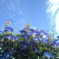 Цветы и небо :: Тамара