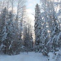 Лесной великан. :: Ирина Аверьянова