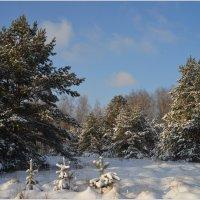 Зимний лес.. :: Анатолий __