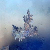 рисует мороз узоры...2 :: petyxov петухов