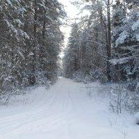Приглашает зимний лес... :: BoxerMak Mak